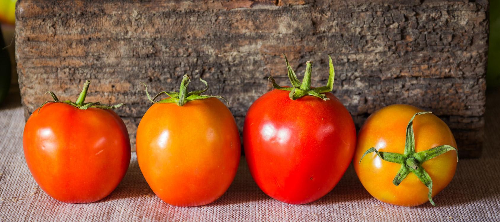 Tomaten_kühlen