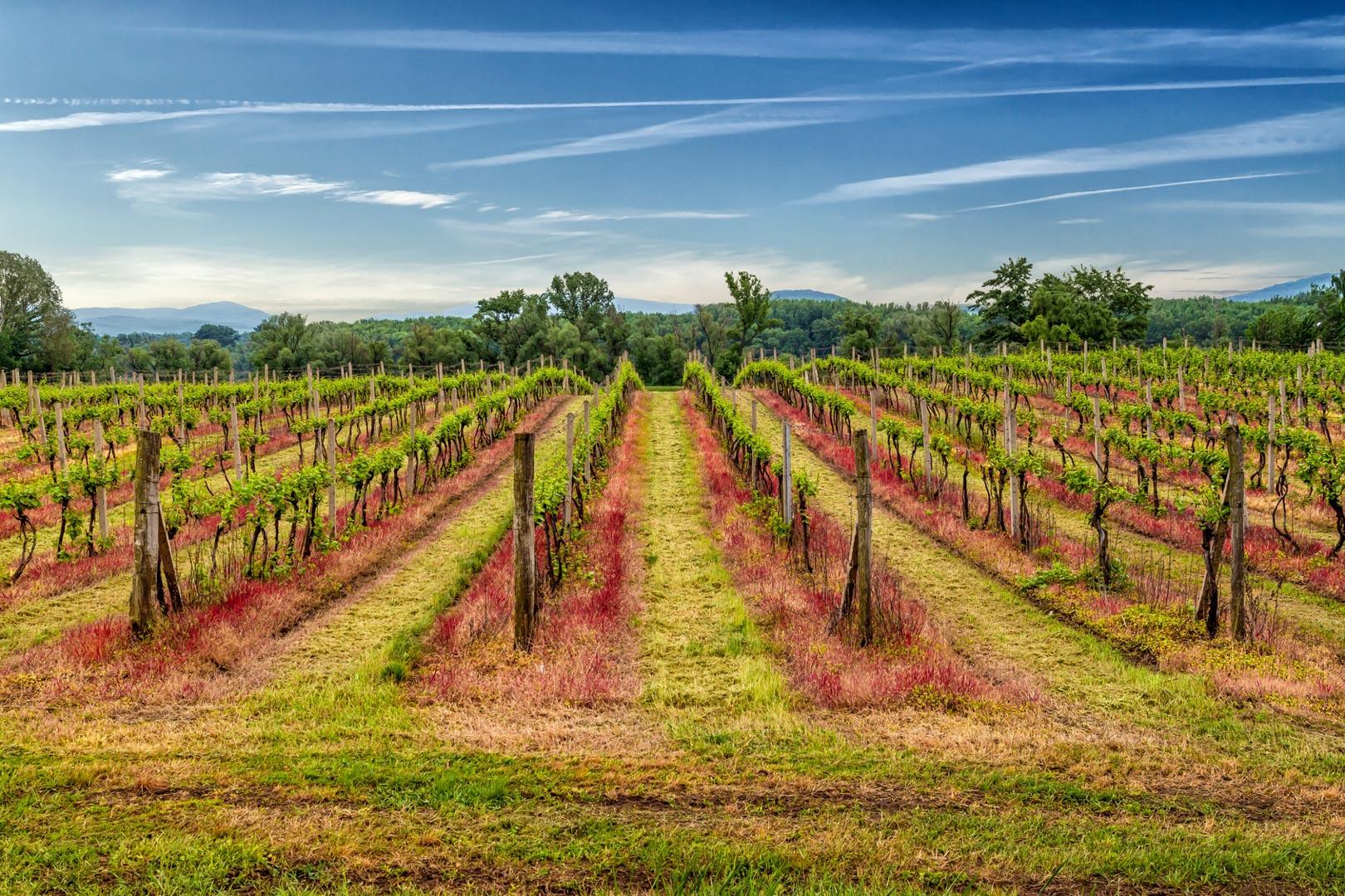 Querkochen Weinregion Tokaj
