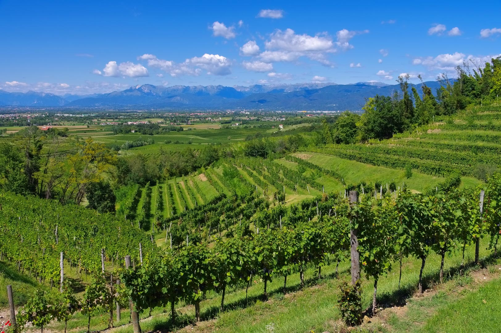 Querkochen Weinregion Friaul