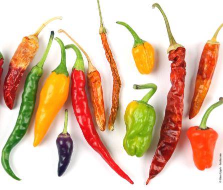 Interessante Fakten über die Chili - Bild