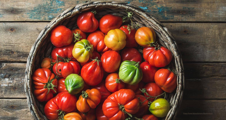 Tomaten und Paradeiser Querkochen