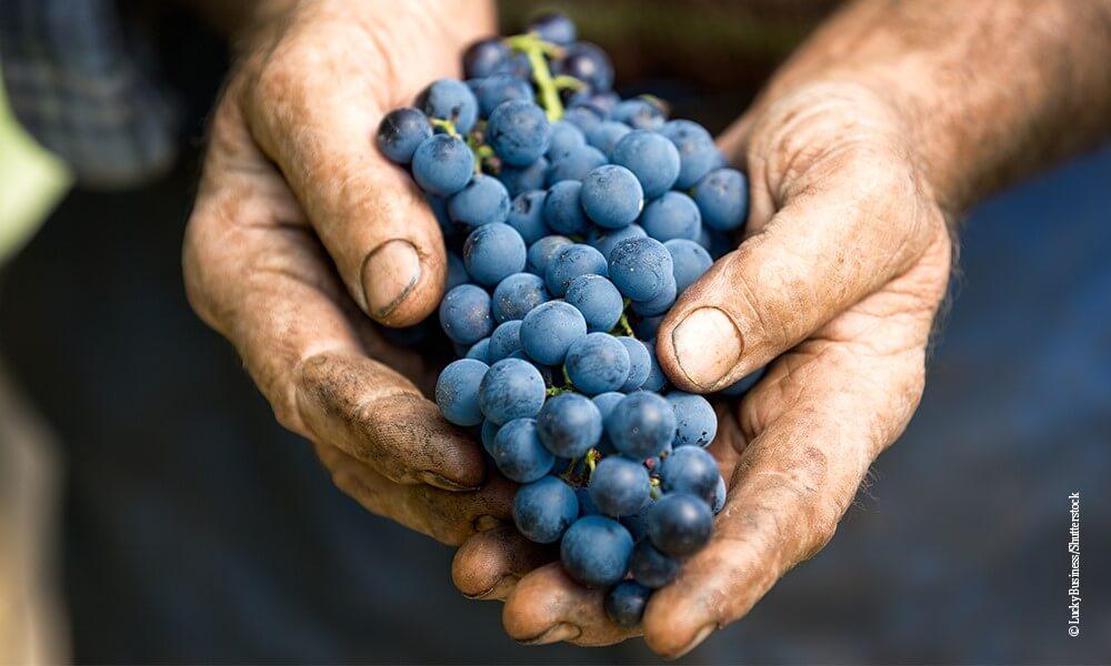 10 europäische Weinsorten - Querkochen