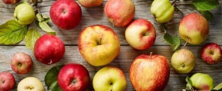Alte Apfelsorten neu entdeckt - Bild