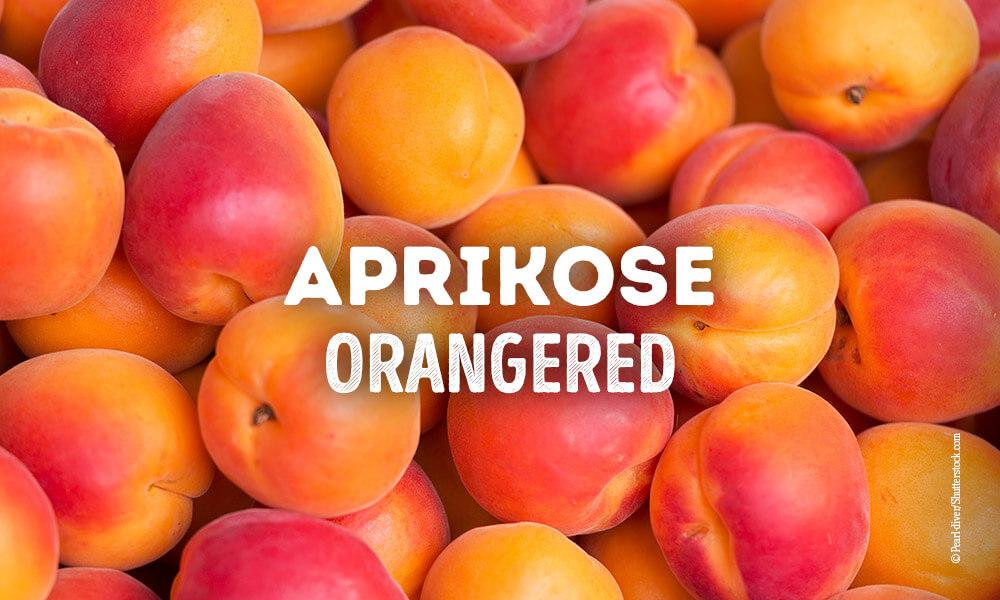 Marillen-Sorte, Aprikosen-Sorte - Orangered - Querkochen