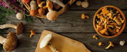 9 Dinge die du über Pilze wissen solltest - Bild