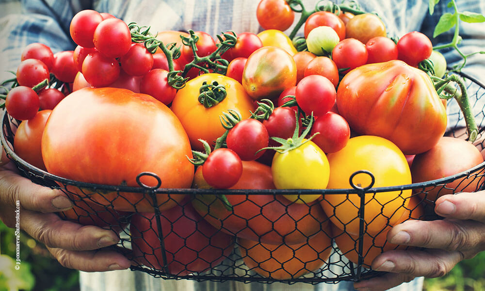 kühlende Lebensmittel - Tomaten