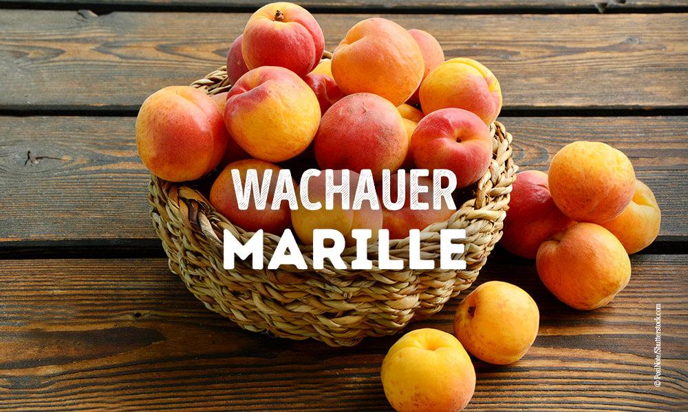 Wachauer-Marille - Sorten - Querkochen